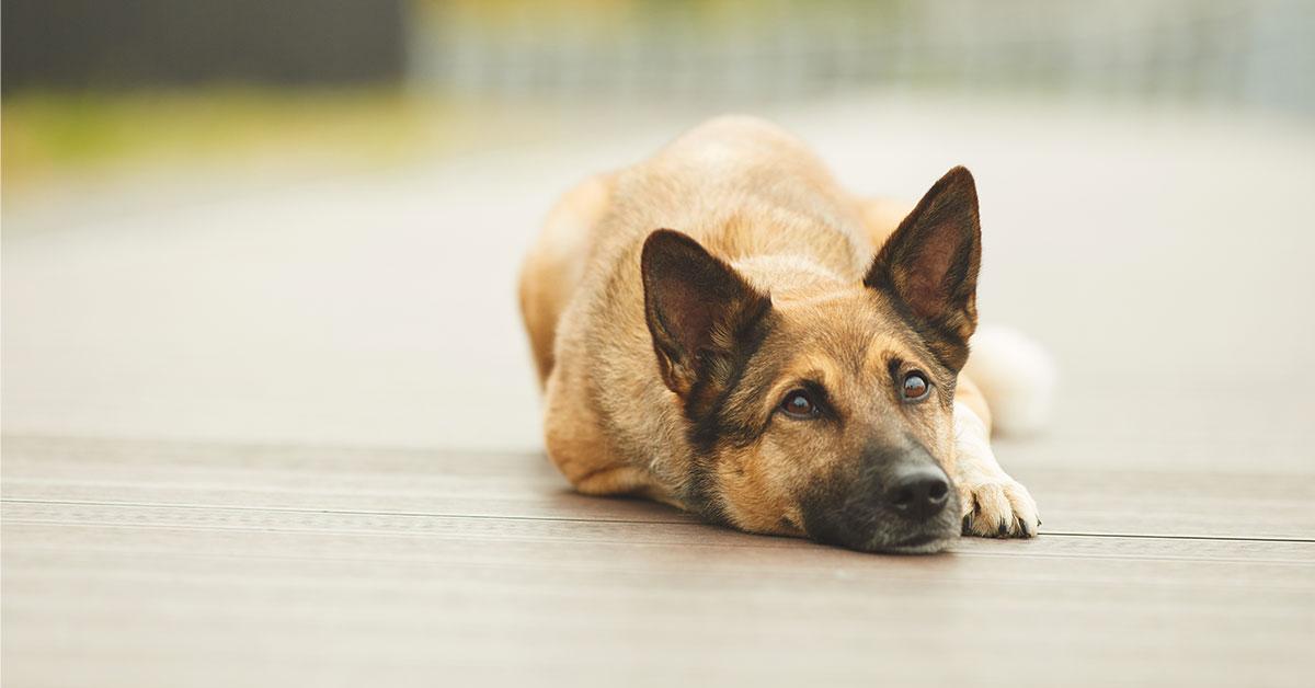 Danni ad animali da lavoro e di affezione